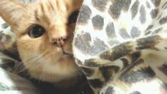 佐藤海弘 公式ブログ/愛猫 画像1