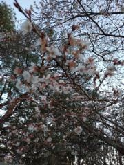 大友典子 公式ブログ/2020 画像3