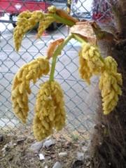大友典子 公式ブログ/シュロの木から… 画像2