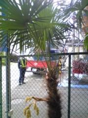 大友典子 公式ブログ/シュロの木から… 画像1