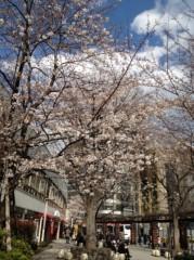 アントニオ小猪木 公式ブログ/銀座の桜 画像1