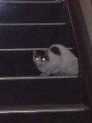アントニオ小猪木 公式ブログ/猫の目光る 画像1