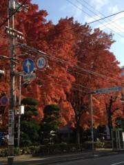 アントニオ小猪木 公式ブログ/真っ赤な楓の木 画像1
