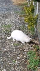 アントニオ小猪木 公式ブログ/久しく白ネコ 画像1