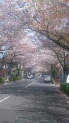 アントニオ小猪木 公式ブログ/かむろ坂通り桜並木 画像1