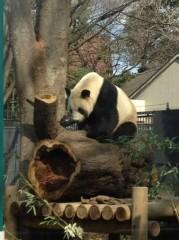 アントニオ小猪木 公式ブログ/もう一頭のパンダ 画像1