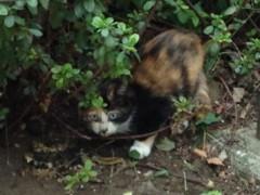 アントニオ小猪木 公式ブログ/三毛の子ネコも 画像1