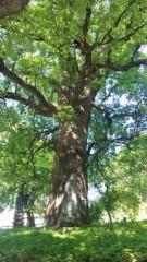 アントニオ小猪木 公式ブログ/代継神社遺跡の木 画像1