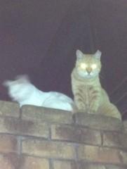 アントニオ小猪木 公式ブログ/高いところにネコ 画像1