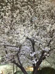 アントニオ小猪木 公式ブログ/数寄屋橋の夜桜 画像1