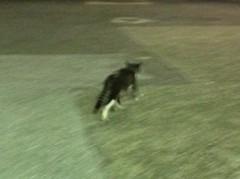アントニオ小猪木 公式ブログ/走る後ろ姿 画像1