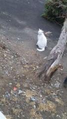 アントニオ小猪木 公式ブログ/白ネコの不思議 画像1