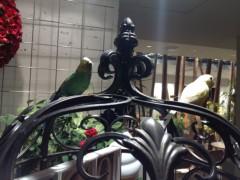 アントニオ小猪木 公式ブログ/喫茶店にインコ? 画像1