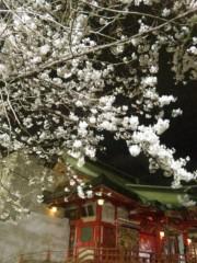 アントニオ小猪木 公式ブログ/花園神社の夜桜 画像1