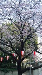 アントニオ小猪木 公式ブログ/上野には桜が… 画像1