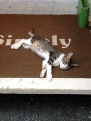 アントニオ小猪木 公式ブログ/高知の猫 画像1