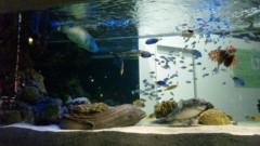 アントニオ小猪木 公式ブログ/数寄屋橋の小さな海 画像1