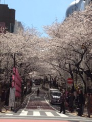 アントニオ小猪木 公式ブログ/渋谷の桜 画像1