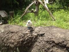 アントニオ小猪木 公式ブログ/頑張れキバタン! 画像1