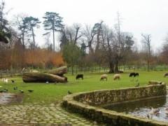アントニオ小猪木 公式ブログ/ベルサイユ宮殿の動物たち 画像1