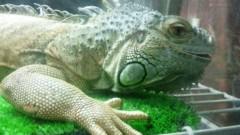 アントニオ小猪木 公式ブログ/爬虫類バー 画像1