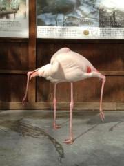 アントニオ小猪木 公式ブログ/フラミンゴの卍固め!? 画像1