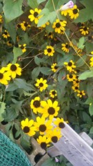 アントニオ小猪木 公式ブログ/道端に咲く花 画像1