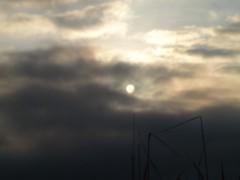 アントニオ小猪木 公式ブログ/太陽のボディライン 画像1