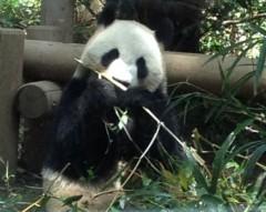 アントニオ小猪木 公式ブログ/久々に動物園へ 画像1