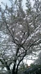 アントニオ小猪木 公式ブログ/山形の桜 画像1