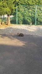 アントニオ小猪木 公式ブログ/今春のネコ 画像1