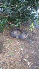 アントニオ小猪木 公式ブログ/こいつはいつもの猫 画像1