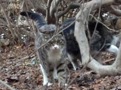 アントニオ小猪木 公式ブログ/五稜郭公園のネコ 画像1