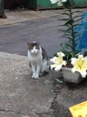 アントニオ小猪木 公式ブログ/小道に花とネコ 画像1