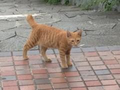 アントニオ小猪木 公式ブログ/草むらからネコ 画像1