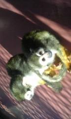 アントニオ小猪木 公式ブログ/サルさん 画像1