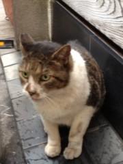 アントニオ小猪木 公式ブログ/新橋のネコ 画像1