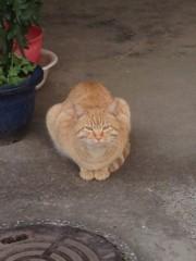 アントニオ小猪木 公式ブログ/民家のトラ猫 画像1