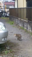 アントニオ小猪木 公式ブログ/猫発見! 画像1