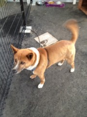 アントニオ小猪木 公式ブログ/井上病院の犬 画像1