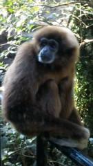 アントニオ小猪木 公式ブログ/上野動物園 画像1