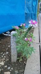 アントニオ小猪木 公式ブログ/水道の脇の花 画像1