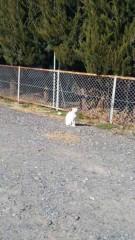アントニオ小猪木 公式ブログ/白ネコがいた! 画像1