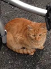 アントニオ小猪木 公式ブログ/歌舞伎町のネコ 画像1
