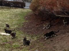 アントニオ小猪木 公式ブログ/五稜郭公園のネコたち 画像1