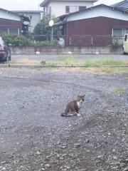 アントニオ小猪木 公式ブログ/秋の猫 画像1