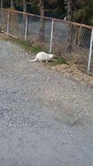 アントニオ小猪木 公式ブログ/新年の白ネコ 画像1