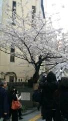 アントニオ小猪木 公式ブログ/道玄坂の桜 画像1
