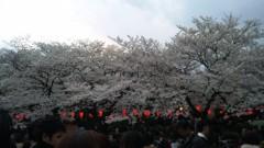 アントニオ小猪木 公式ブログ/桜満開 画像1