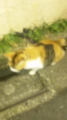 アントニオ小猪木 公式ブログ/人懐っこいネコ 画像1